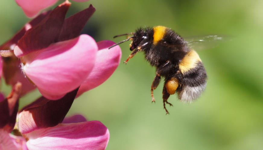 Nu byggs fler hotell – för insekter